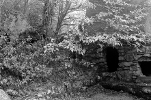 The cowardly lin's den